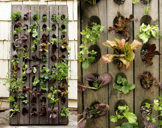 Lettuce planters for patio