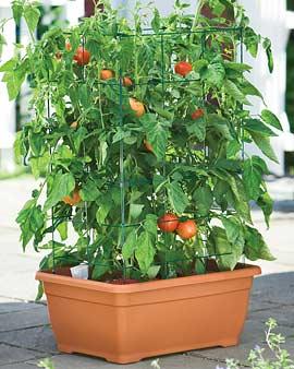 Tomato Success Planter