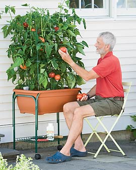Tomato Trolley Planter