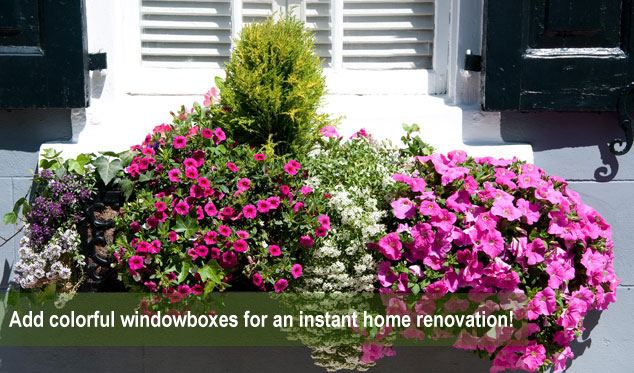 Window boxes & planters