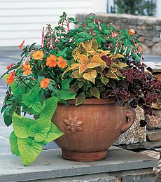 Annual Flowers Make Perfect Plants For Garden Planters