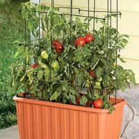 Rolling Tomato Planter